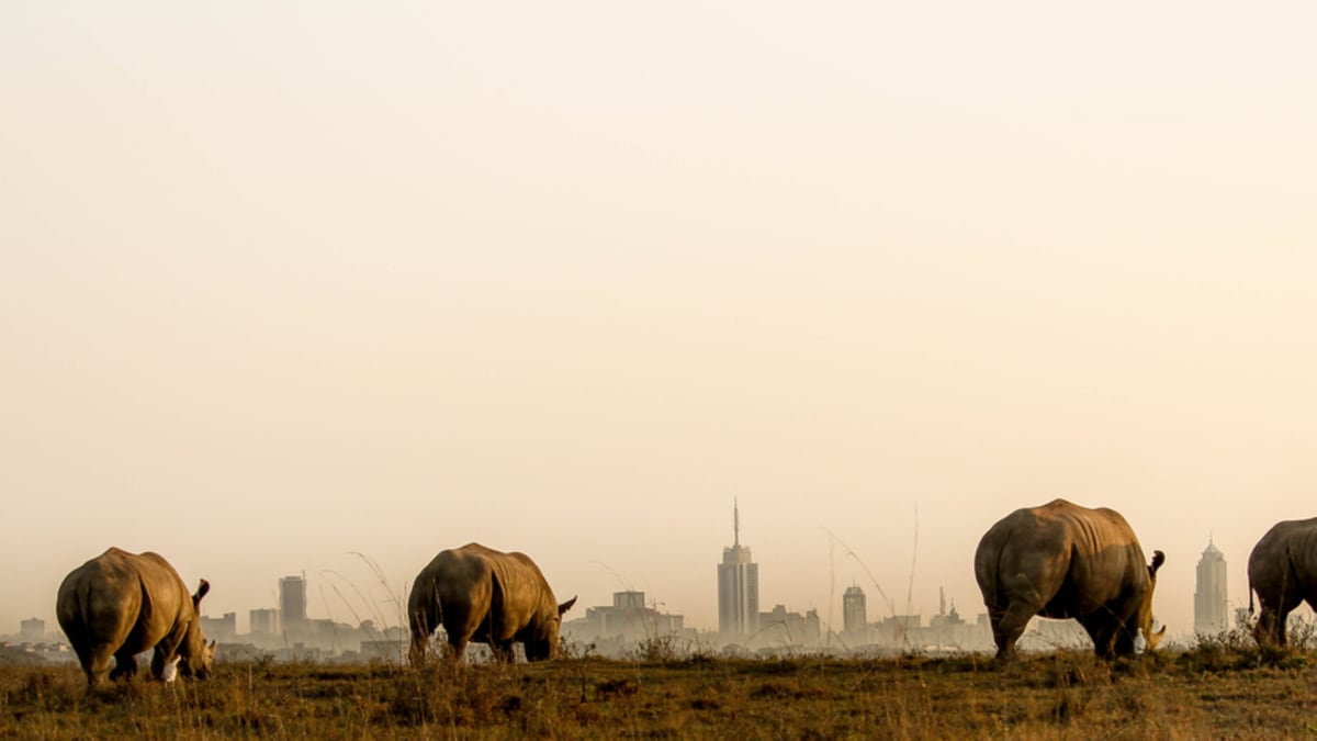 Nairobi Tour Packages & Holidays With Tripfez