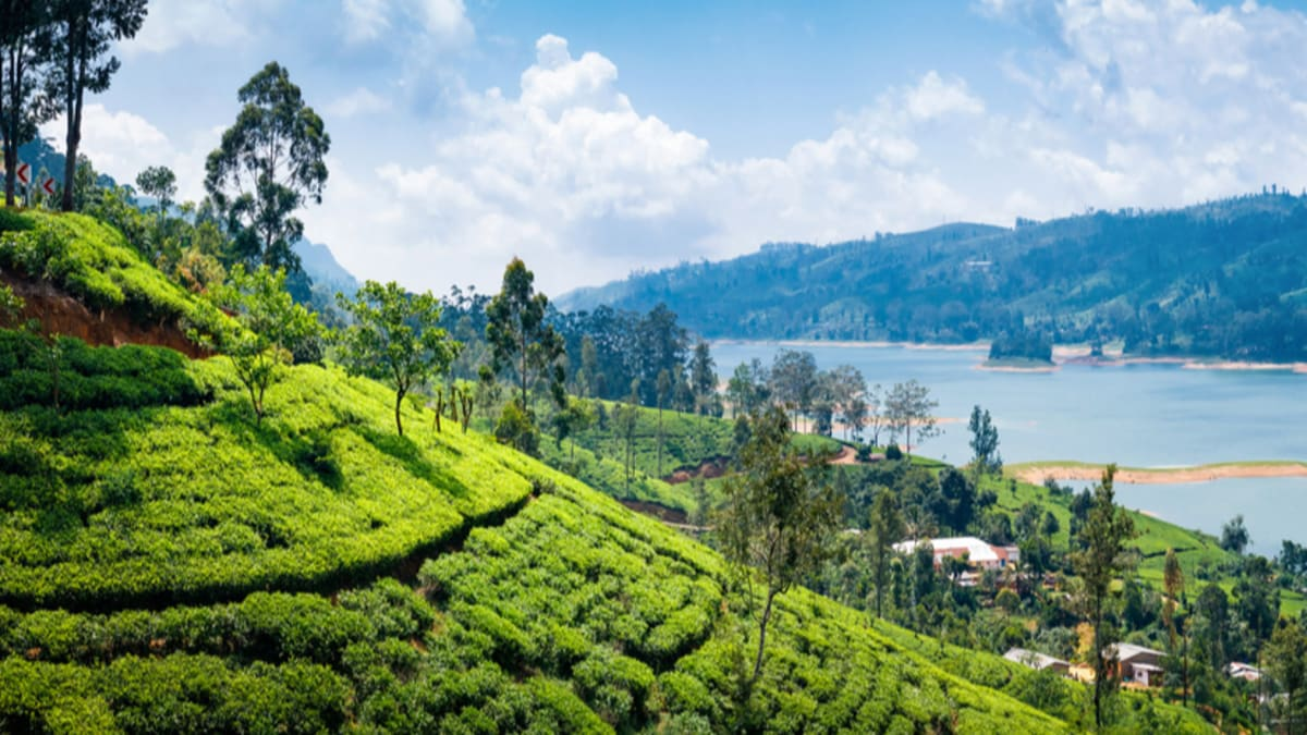 Nuwara Eliya Tour Packages & Holidays With Tripfez