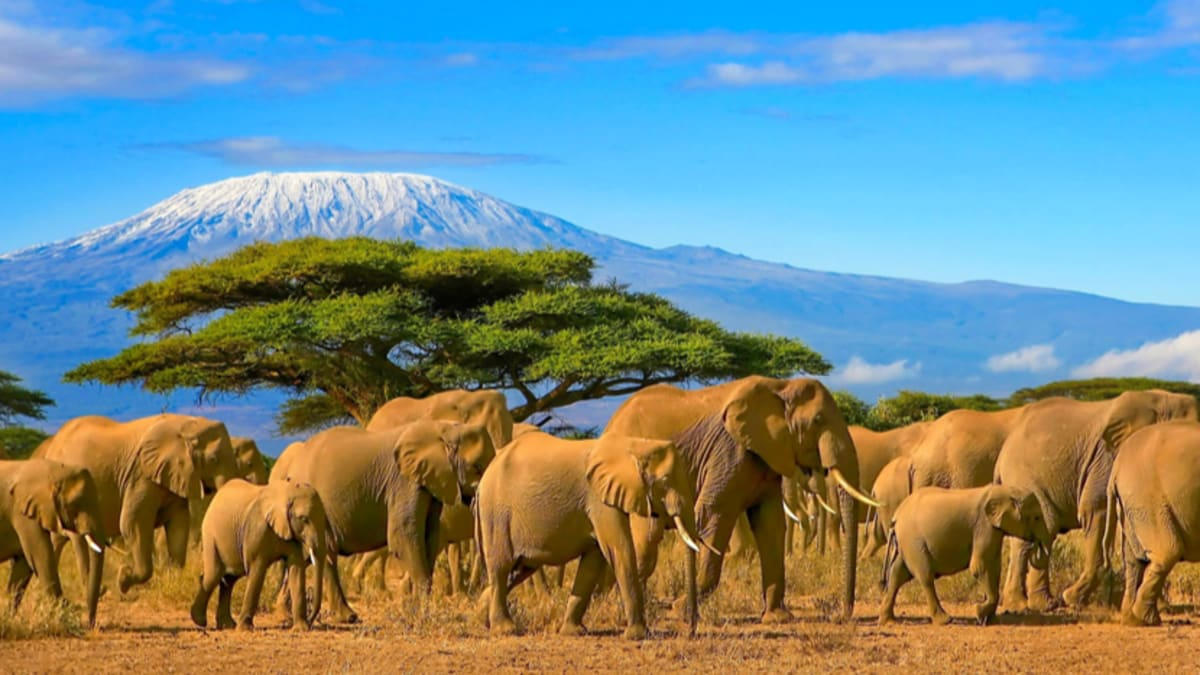 Kenya Tour Packages & Holidays With Tripfez