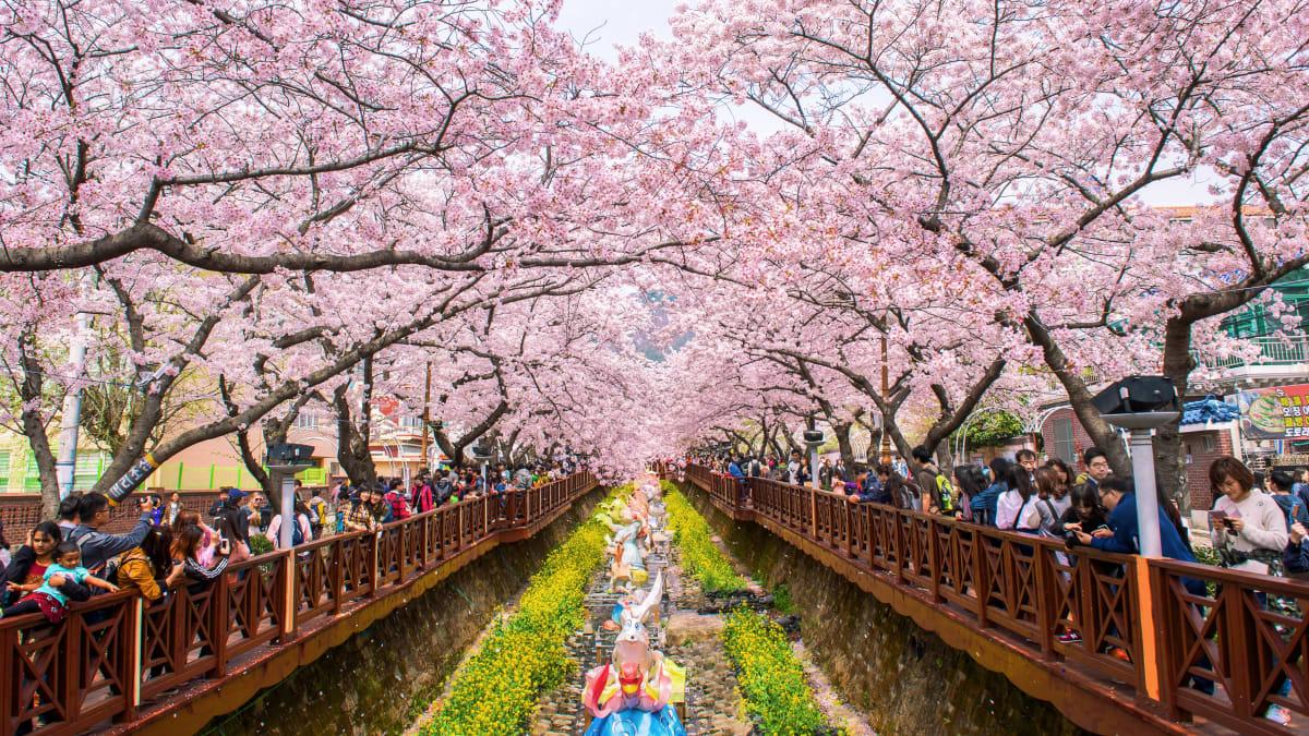 Pakej Percutian ke Seoul Bersama Tripfez