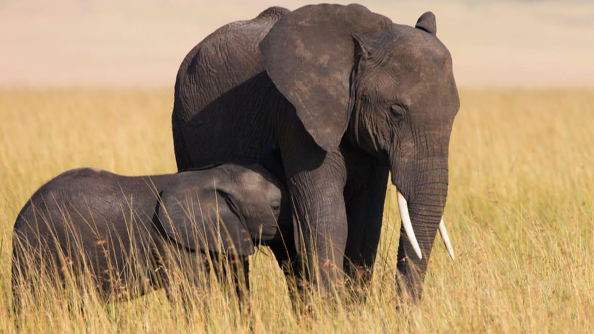 Safari Migrasi Tahunan  Bersama Tripfez