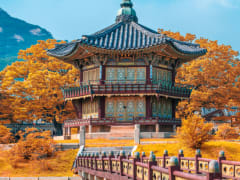 Tripfez TravelKorea (Autumn) package