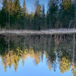 A pond with the reflection of the tree in the water. the image is turned upside down so we disn't know if the water is the sky and vice versa