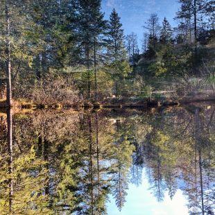 Un des etang des Sources. la. egetation se reflette dans l'eau. Les arbres ont revetu leur couleur d'automne.