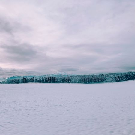 A snowy field with white trees in the background