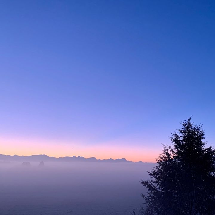 A view of the sunrise with the sky bering orange and purple. We are just above the clouds and there is a tree in the lower right corner