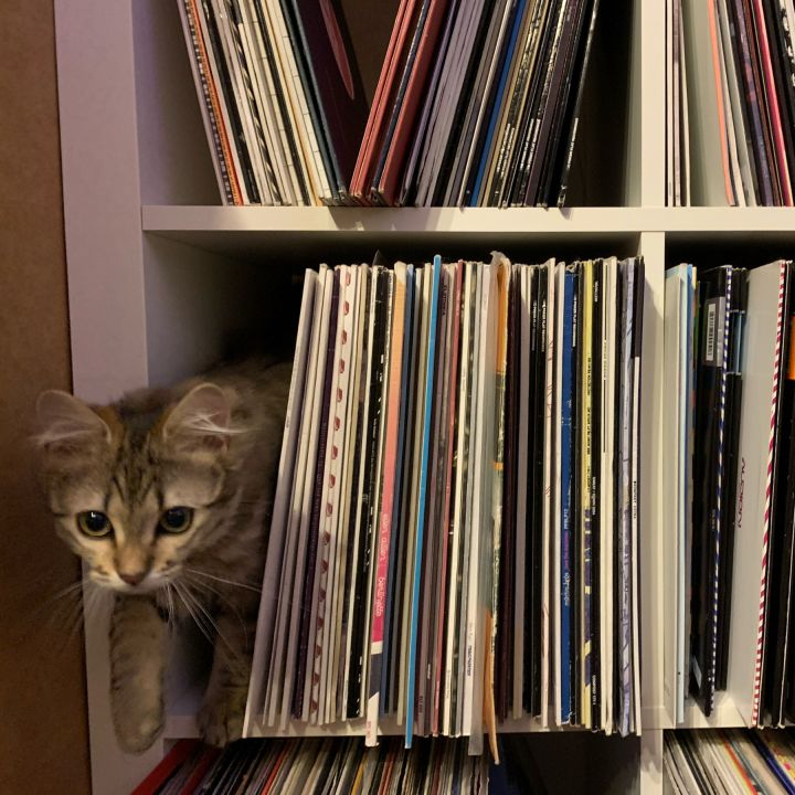 My cat in the middle of my vinyls