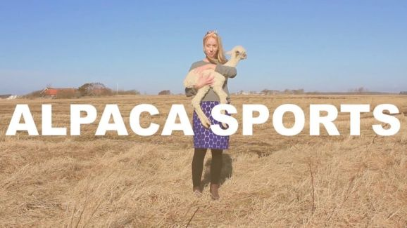 Alpaca Sports pictures