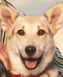 Jay Kopelman