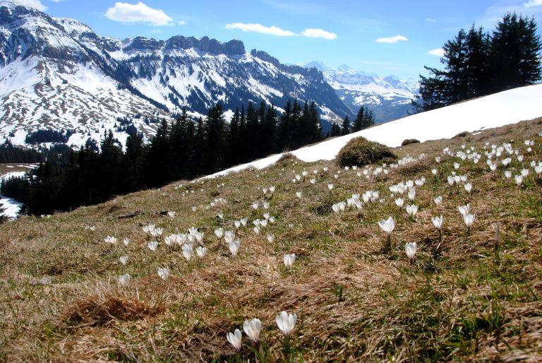 Frühlingswanderungen in der Schweiz mit (und ohne) Gipfel