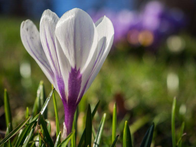 Die schönsten Frühlingswanderungen in den Alpen