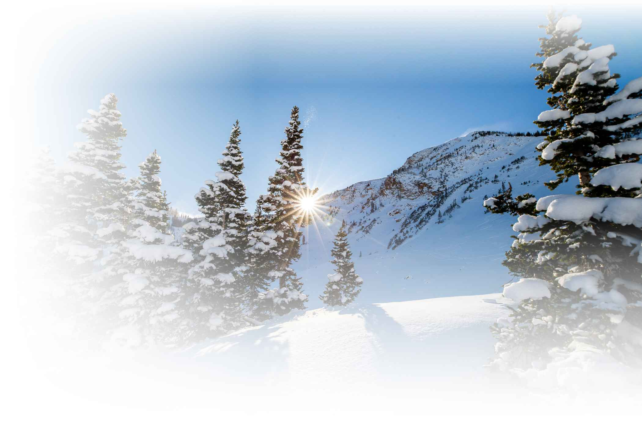 Snowy trees on a sunny winter day at Alta Ski Area
