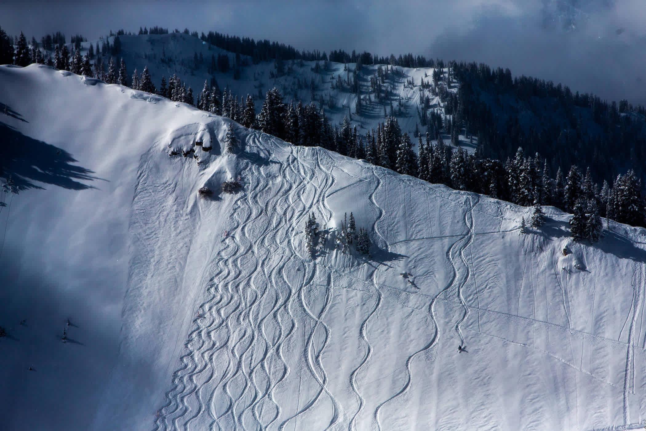 Tracks on Baldy Shoulder   Photo: Rocko Menzyk