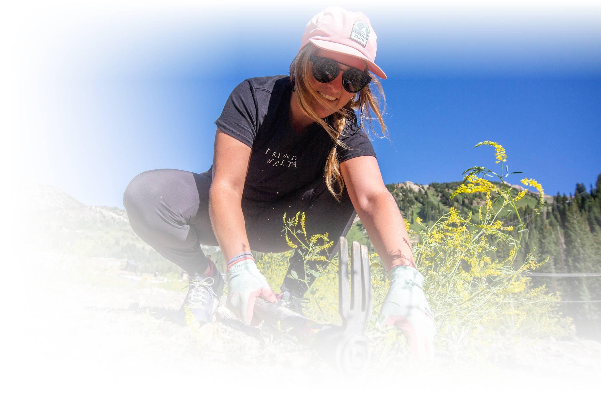 A volunteer pulls weeds at Alta Ski Area on a sunny Volunteer Day