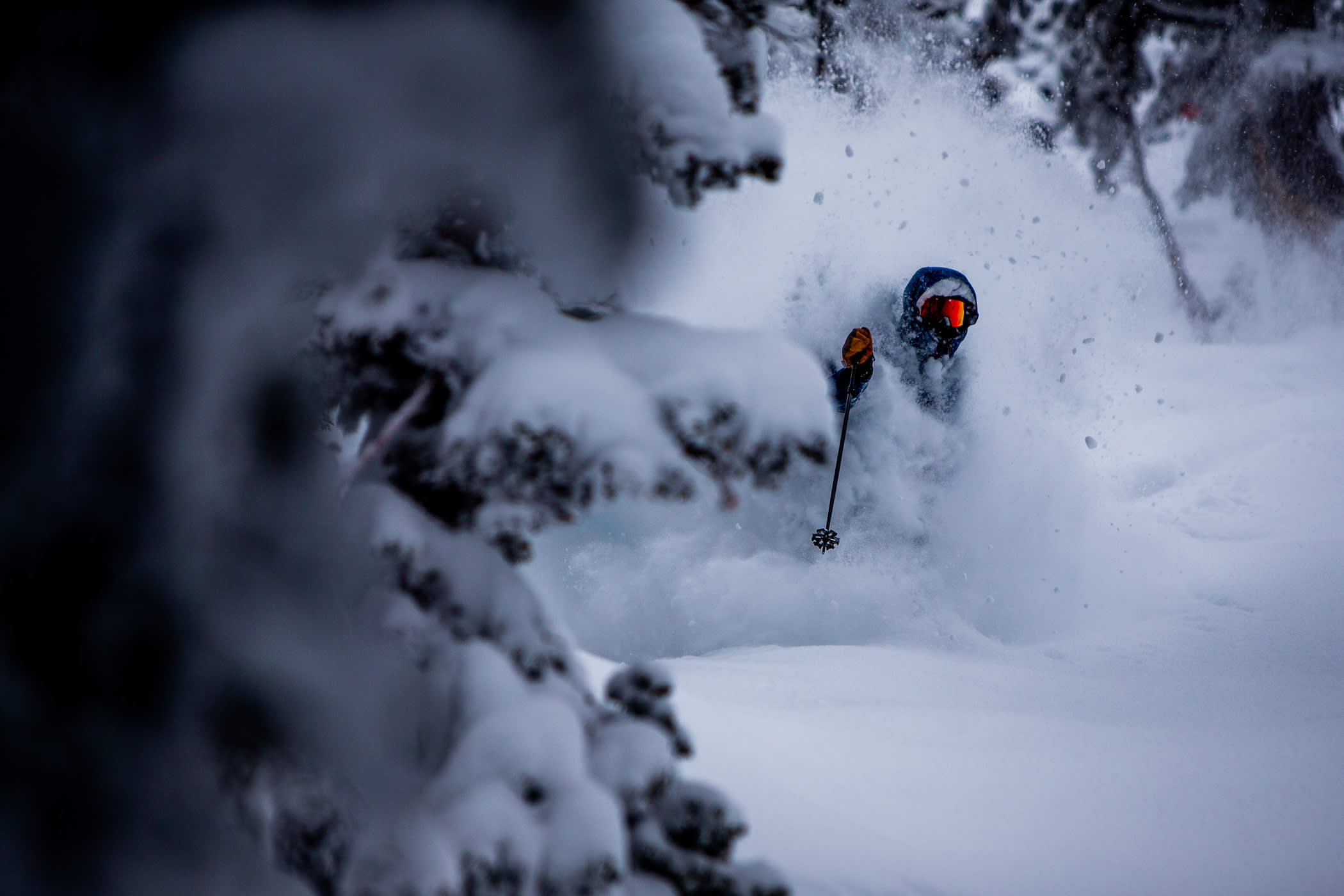 Jonah Williams loves powder skiing   Photo: Rocko Menzyk