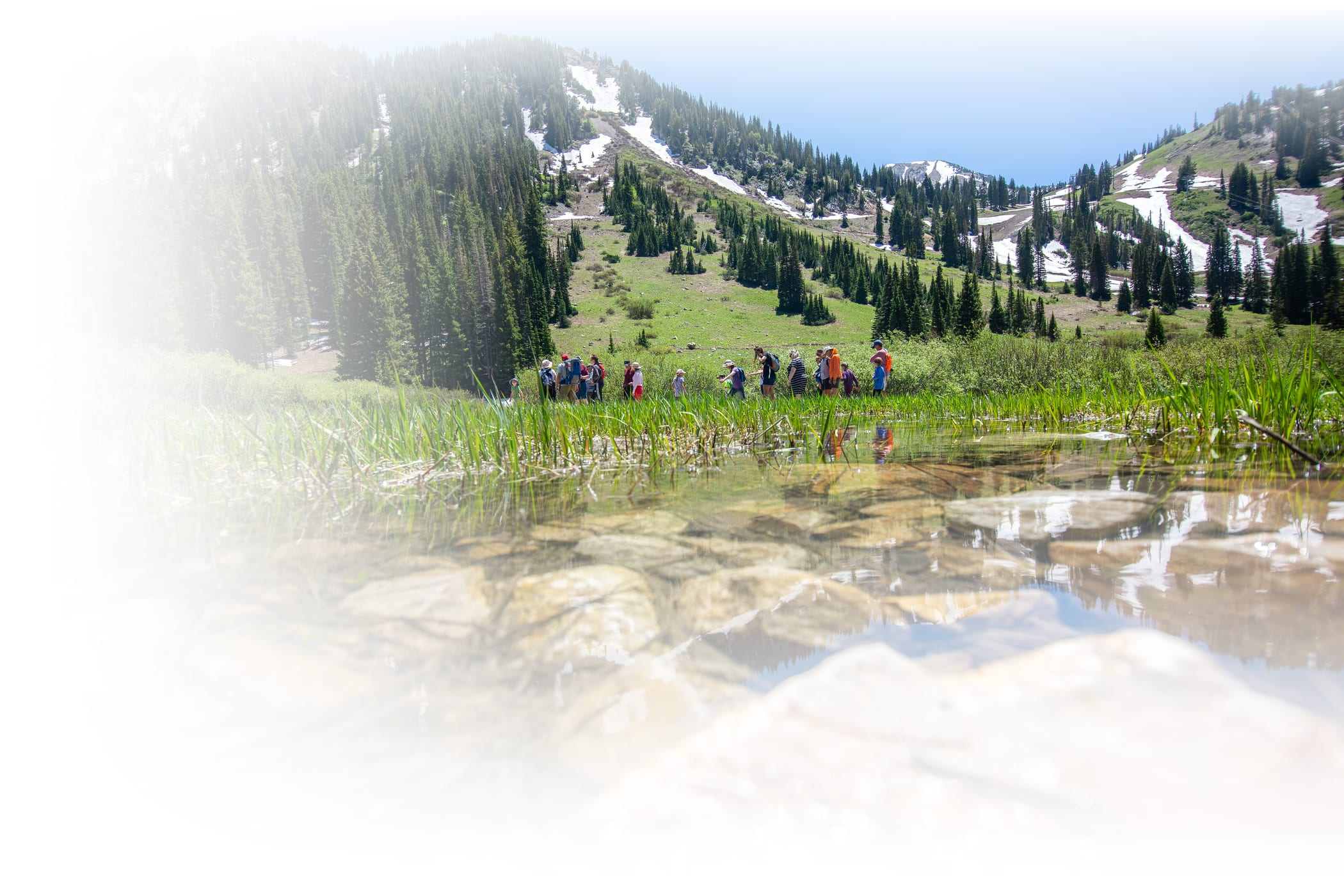 Volunteers work to clean up Alta Ski Area on a sunny summer day