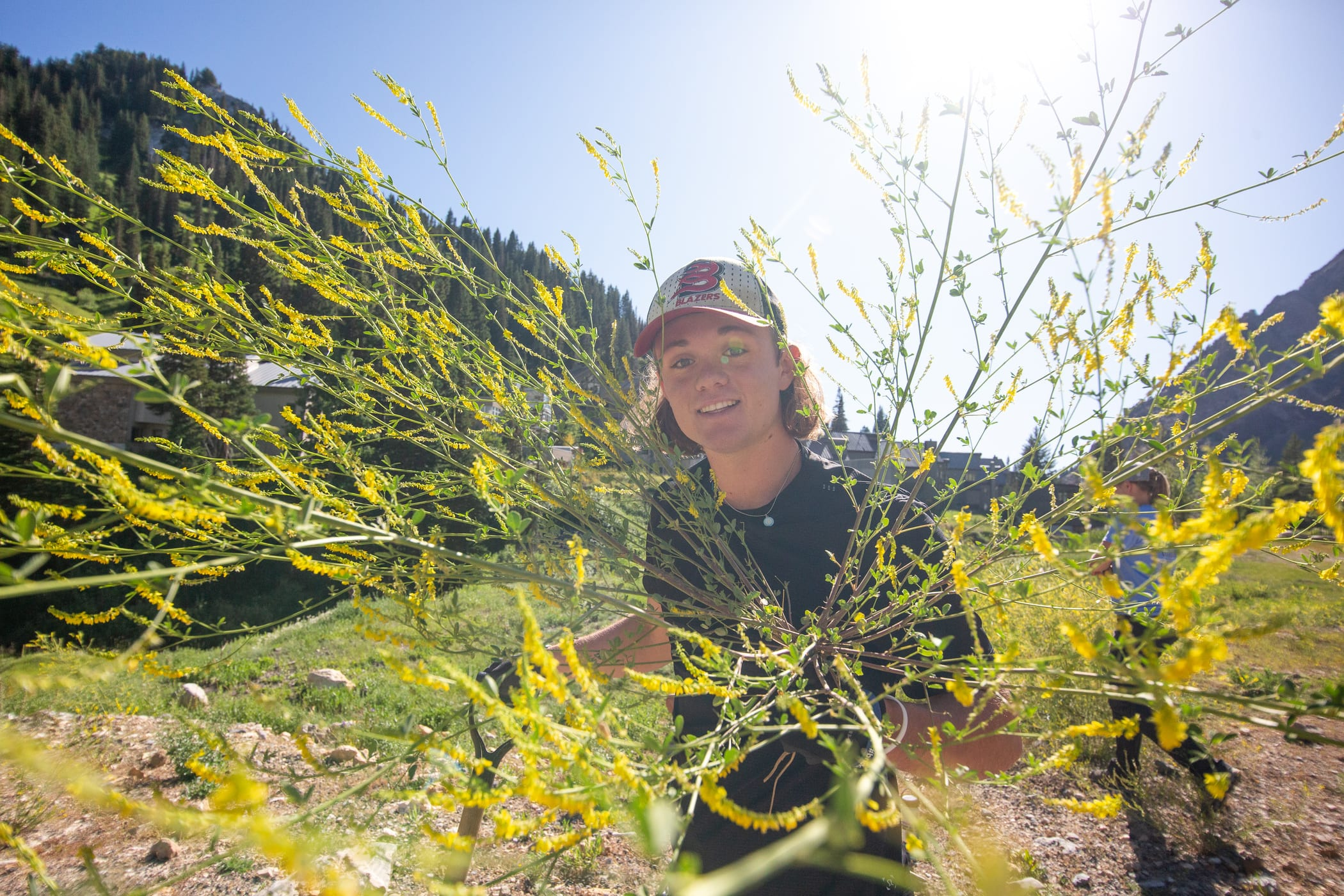 Noxious Weed removal at Alta Ski Area