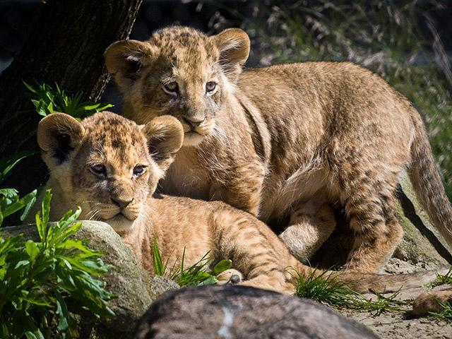 טיולי הטבע של Center Parcs הולכים לגן חיות