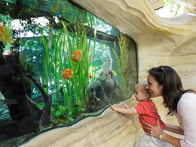 לגלות את הדגים בסנטר פארקס