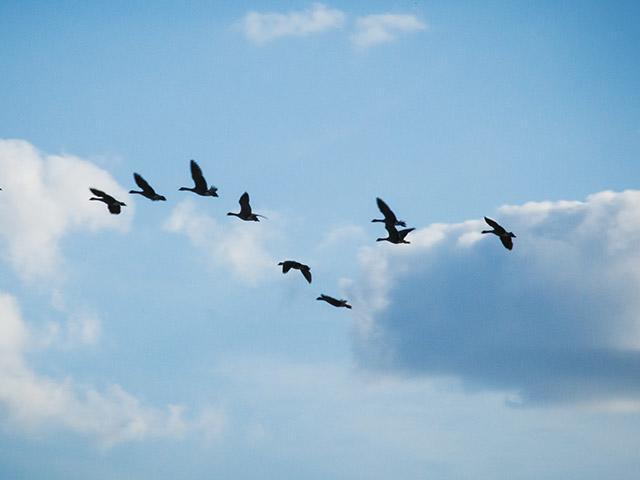 מופע עופות דורסים בסנטר פארקס