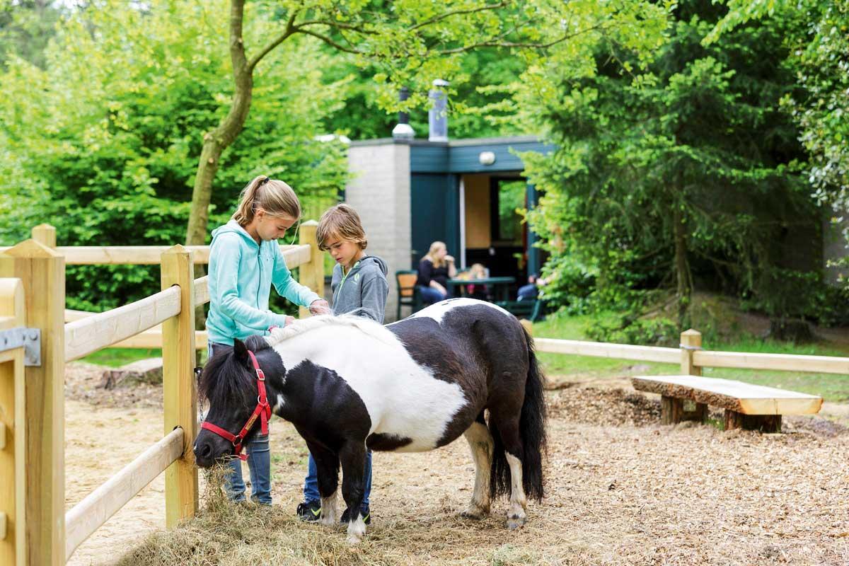 קוטג' Pony בכפר הנופש Erperheide