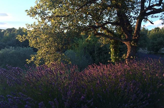 Charming Lavender Mansion