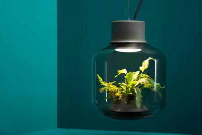 Eine Leuchte in der Pflanzen wohnen, ein autonomes Ökosystem