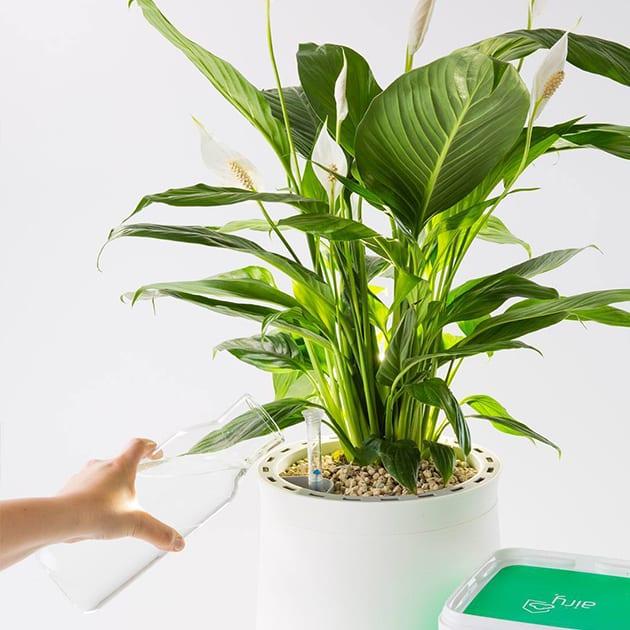 AIRY – die luftreinigenden Pflanzentöpfe