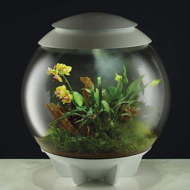 Das automatische biOrb Air Terrarium von Oase