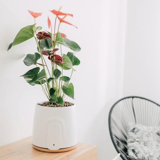 Luftreiniger durch Pflanzenkraft, Natede von Vitesy