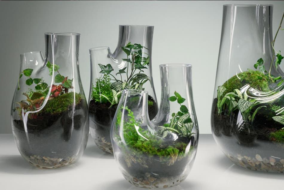 Tom Dixon Terrarium – Entwerfe Dein eigenes Terrarium