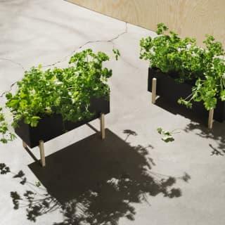 Botanic Box von Design House Stockholm - eine grüne Oase für Dein Zuhause