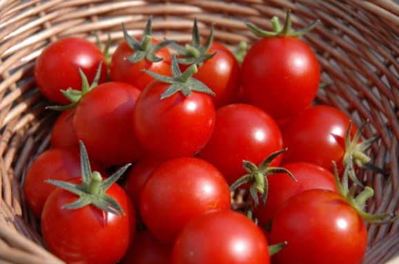Obat Ambeien Alami Tomat