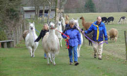 Ashdown Forest Llama Park - East Sussex click to go to site.