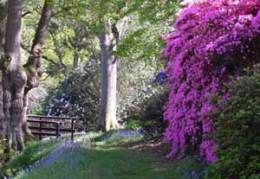 High Beeches Gardens - Handcross West Sussex click to go to site.