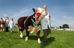 The South of England Show - Ardingly Showground - June click to go to site.