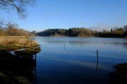 Warnham Nature Reserve - Horsham West Sussex click to go to site.