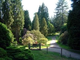 Bedgebury National Pinetum - Goudhurst Kent click to go to site.