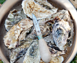 Falmouth Oyster Festival - October click to go to site.