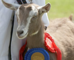 The Royal Cornwall Show - June click to go to site.