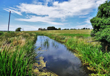 Blog Small Thumbnail - Eight legs on Pevensey Levels