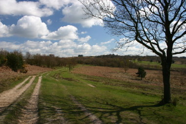 Blog Thumbnail - A return to Ashdown Forest, East Sussex