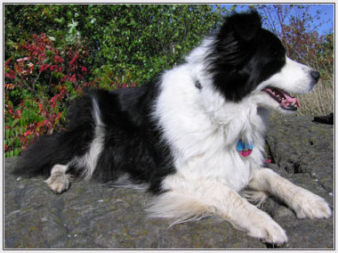 Blog Thumbnail - Sussex sheepdogs