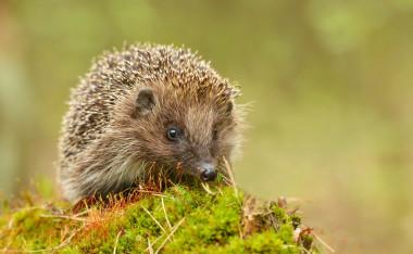 Blog Thumbnail - Sussex creatures