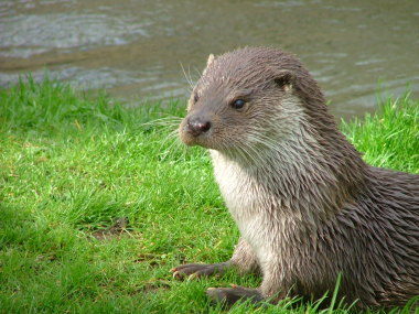 Blog Thumbnail - Otters and big cats in Sussex?