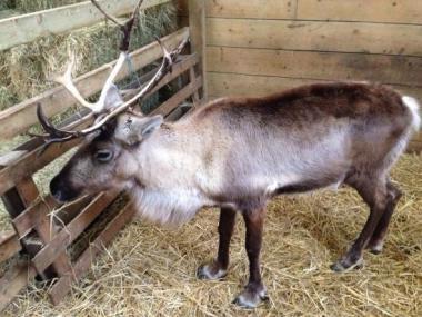 Blog Thumbnail - Santa's helpers in East Sussex!