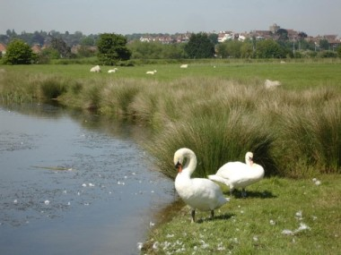 Blog Thumbnail - Swanning around in Sussex