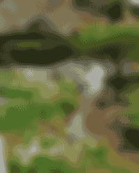 Jardin des Berchigranges. Roulottes. Ma roulotte sous les Chênes. Raon aux bois. Vosges.