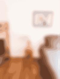chambre - lit superposé - maison hiwwa - cap ferret