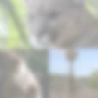 Zoo parc de beauval, Singe, Puma elephant a voir à 25minutes du Gîte Au Four à Pain en loir-et-cher